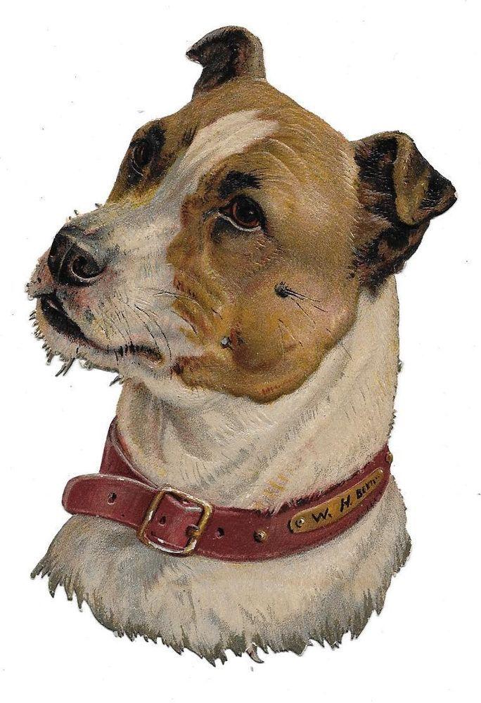 Victorian Die Cut Scrap Bull Terrier: