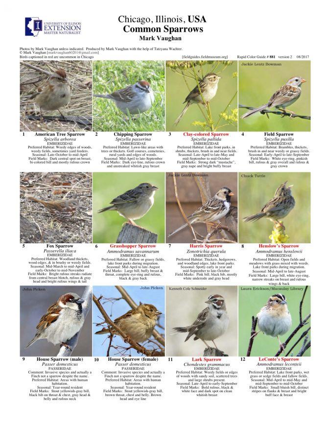 881_usa_common_sparrows_v2.pdf