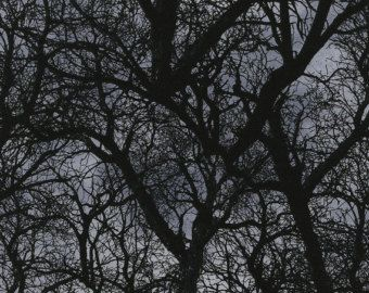 Tree Branches Halloween Wicked Black Timeless Treasures Fabric 1 yard