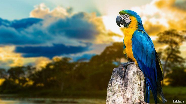 Очень красивые снимки (55 фото) | Обои с птицами, Попугай ...