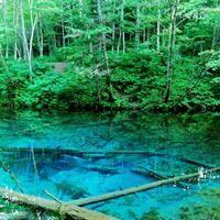 一度は目にしたい。幻想的な色彩に圧倒される「神の子池」