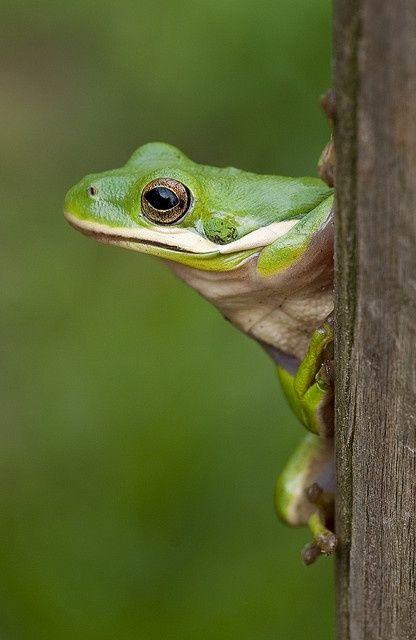 "Frog: ""Turn to Me.""                 (Photo By: ACreepingMalaise.)"