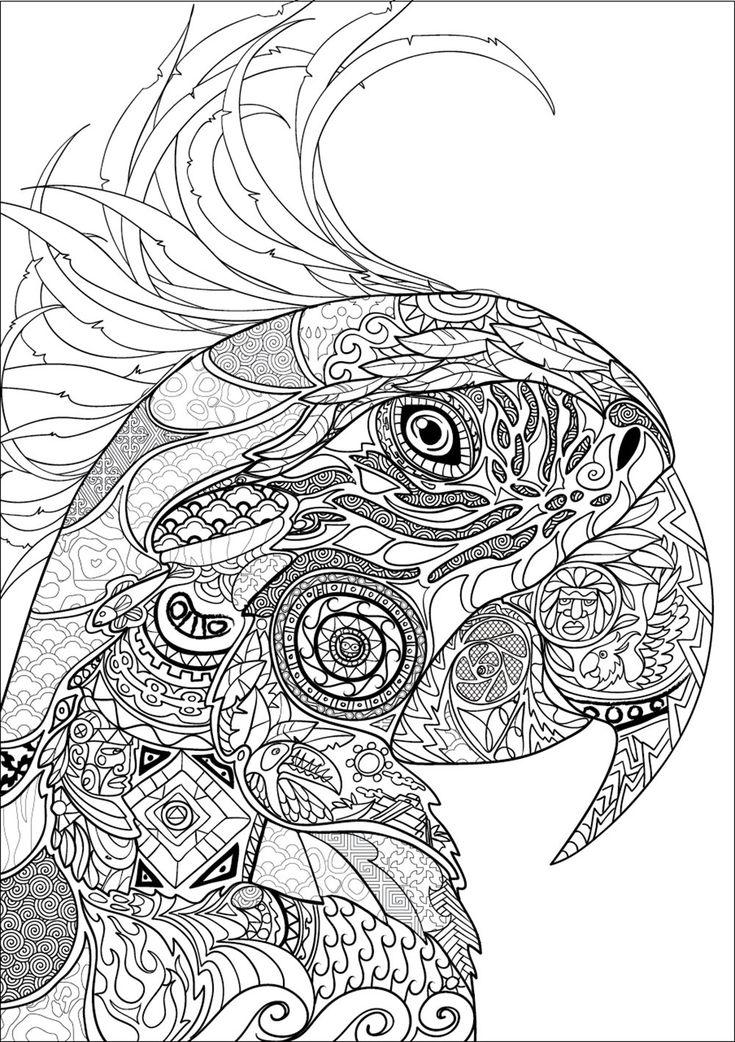 nouveau bestiaire extraordinaire 100 coloriages anti stress amazoncouk adult coloring pagescoloring