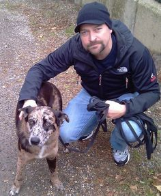Meet Maddie, a Rescue Dog Turned TV Star on Syfy's Ghost Hunters | Dogster. Australian Cattle Dog/German Shephard