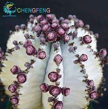 Japoński Najlepiej sprzedających Rzadkie Nasiona Sukulentów Około 50 sztuk Rzadkie Nasiona Kwiatów Bonsai Sementes Nasiona Kaktus Kryty Rośliny Kwiaty pot(China (Mainland))