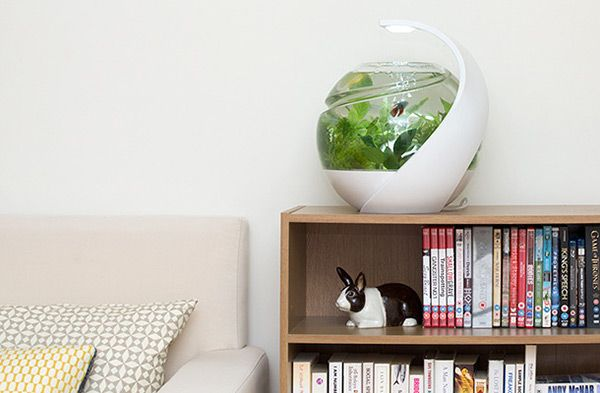 It's called Avo and it's the first truly self-maintaining tank! Its unique filtration system creates a balanced ecosystem where the plants, fish and bacteria