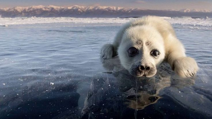 Photoshoot from Adorable Seal Pup with Photographer Alexy Trofimov
