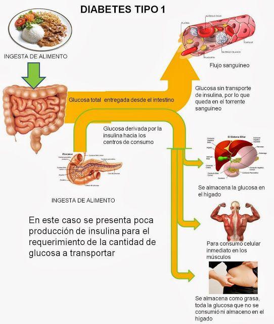 Diabetes Causas efectos y como controlarla: como funciona la diabetes