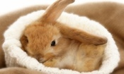 So, You Want to Adopt a Bunny?  Photos slide show. Also important information about adopting a rabbit.