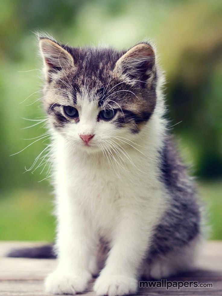 Cute Kitten Wallpaper HD - #518 #cat #kitty #kitten #cats