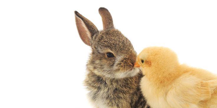 """La fin de la semaine pascale sonne le début de la saison des lapins abandonnés.  Kaylie Ngo, présidente d'un """"orphelinat"""" à London, en Ontario, rappelle que cet"""