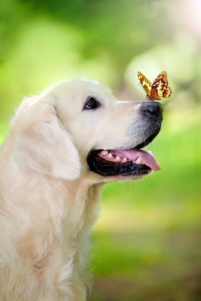 #GoldenRetrievers love everything in nature and everything in nature loves them!...found on fundogpics.com