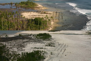 Killed-Off Corals Hold Clues to Earthquake Prediction...  Some of the biggest coral die-offs in recorded history happened in 2004 and 2005, after massive earthquakes in Sumatra, off the coast of Indonesia.  Now, researchers report similar evidence of ancient massive coral kills on Simeulue Island, caused by ancient earthquakes. An analysis of the fossil coral beds provides clues to the history of megaearthquakes in the region, and could help predict future quakes.