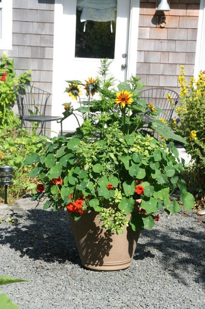 8 Knockout Flowers for a Fall Container Garden - Your cups will over-floweth with color and interest this fall when you plant these vivid seasonal garden classics