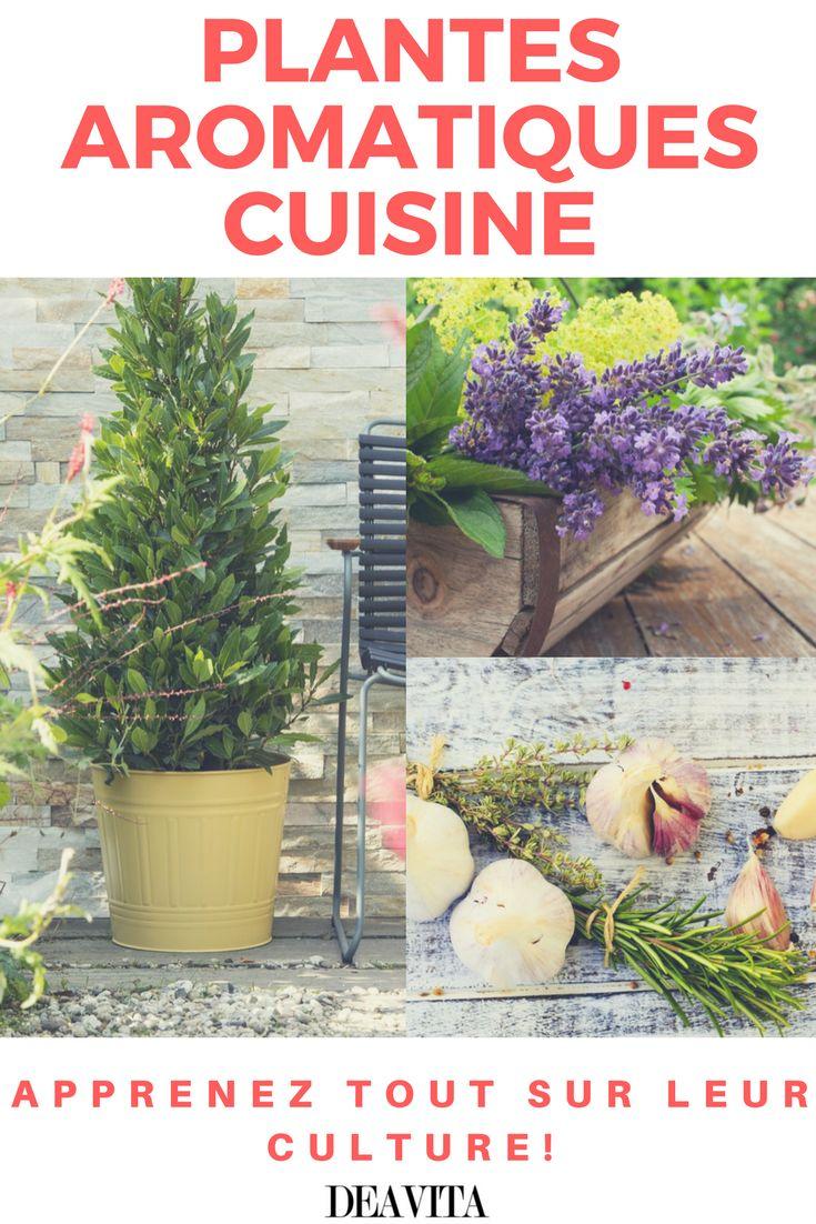 Les 307 meilleures images propos de plantes vertes et fleurs sur pinterest design pots et - Herbes aromatiques cuisine ...