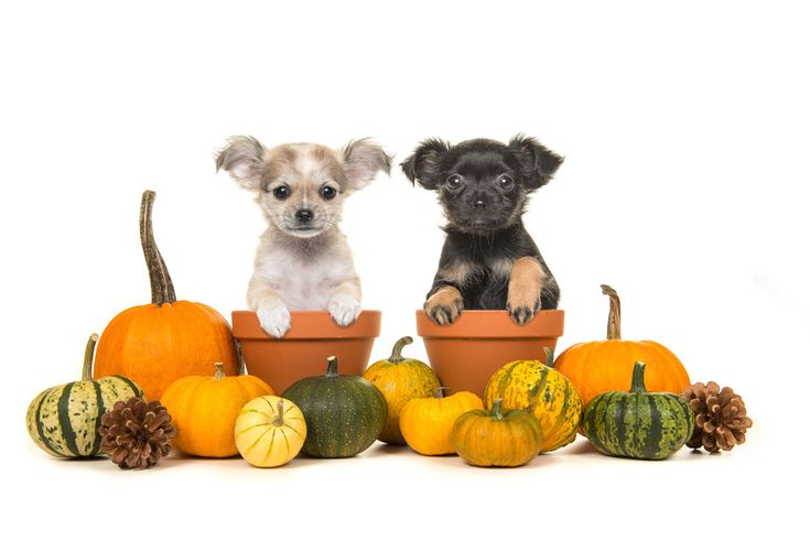 Holiday candy dangers and your pet with images pet