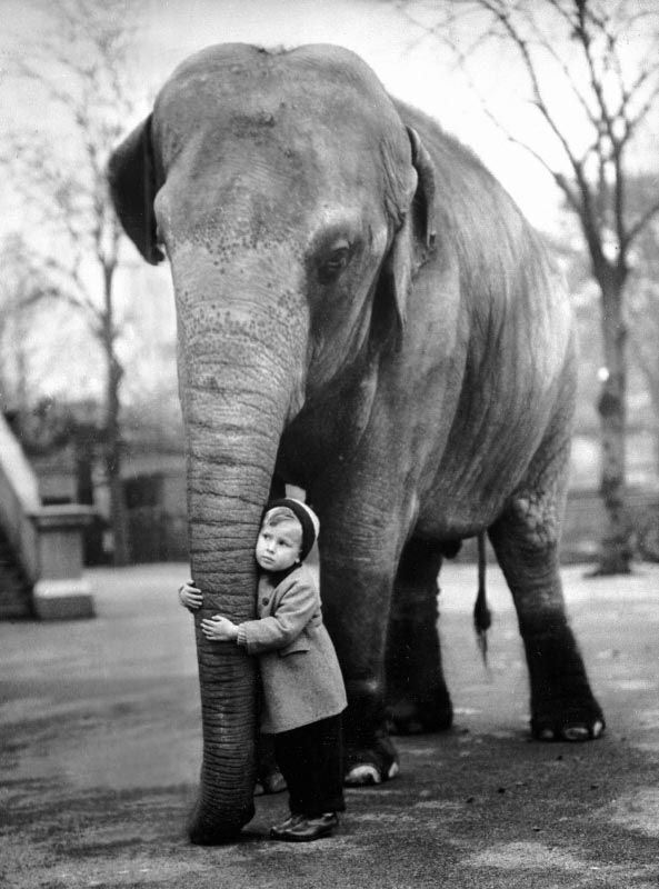 The Boy and the Elephant via Edward Grossi, indire.it: During a visit, on 20 November 1958, to a zoo in London, a child thoughtfully embraces the trunk of an old and gentle elephant. http://www.indire.it/cgi-bin/diafindcgi4?dbnpath=/isis3/dati/dia/immag=D-JFVG3E6X=Completo=1_header=/archivi/dia/header.php #Photography #Elephant #Boy