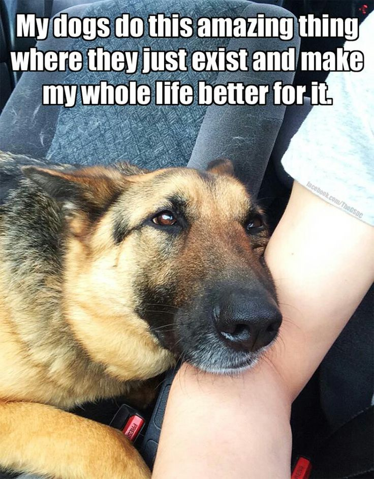Dogs make everything better