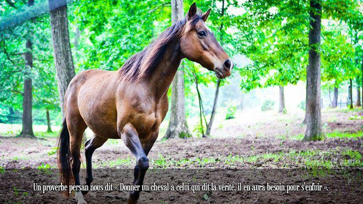 Un proverbe persan nous dit « Donner un cheval à celui qui dit la vérité, il en aura besoin pour s'enfuir ».