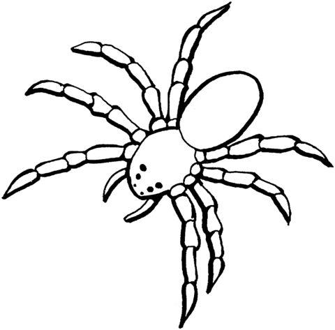 Dibujo: una Araña Dibujo para colorear