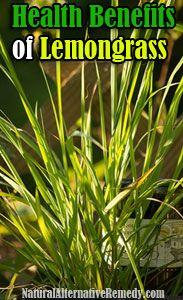 Top 9 Health Benefits of Lemongrass | Natural Alternative Remedy #lemongrass #herbs