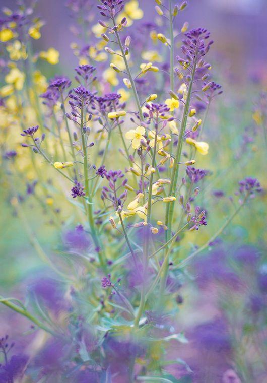 Beautiful wildflowers in purple and yellow.