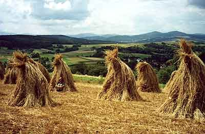 Polska wies ~ I've always wondered WHY I have been fascinated by all shapes and sizes of hay stacks ~ when I saw these I felt like they were about to come ALIVE and dance !!