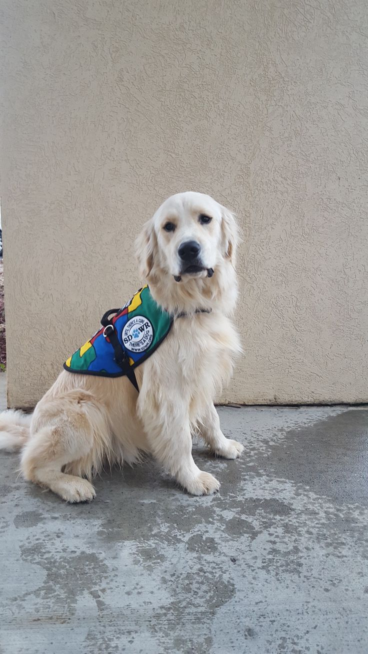 ASD Service Dog is delivered to 6 yr-old in Connecticut