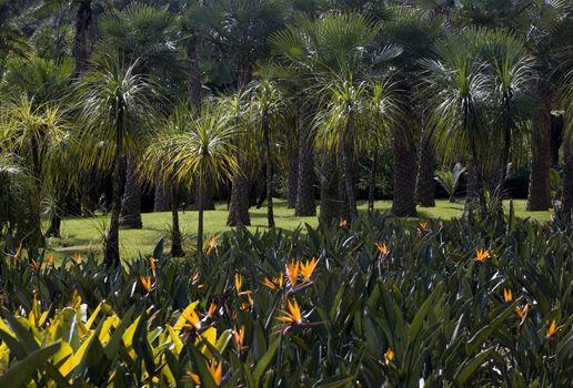 mini jardim botanico:em mini jardim bem estar jardinagem jardim dentro de casa miniatura de
