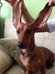 aria tiene orejas muy grandes jeje foto de:camii