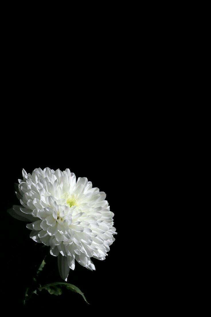 Rest In Peace In 2019 Dark Flowers Flowers Flower Wallpaper