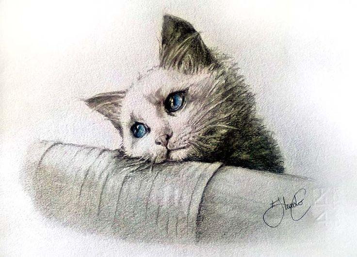 illustrazione (matite colorate)