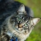 Diabetic Cat Food - How To Information | eHow.com
