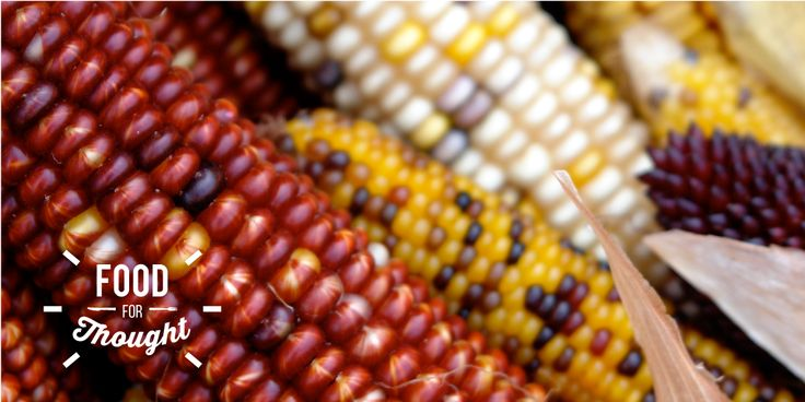 Food-Security_featured image