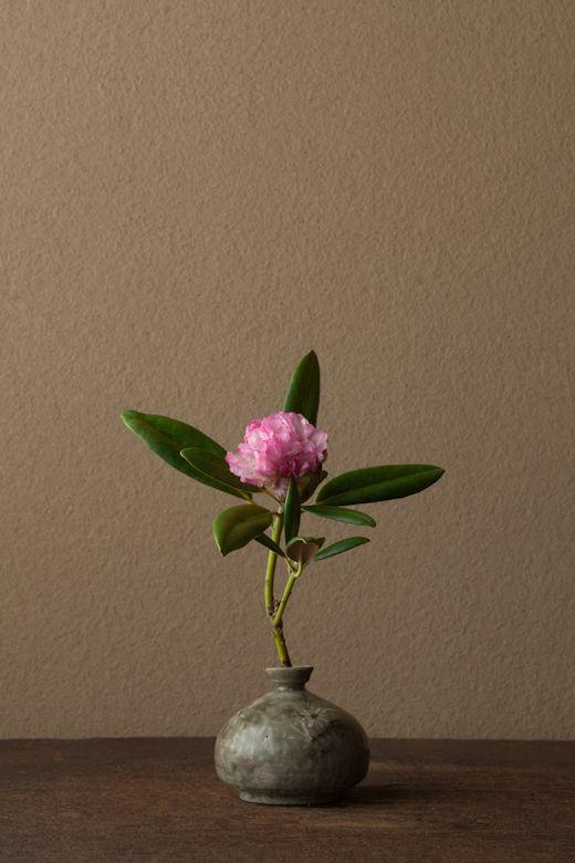 一日一花 川瀬敏郎 2012年5月29日(火) 石楠花を見ると室生寺の仏たちを思います。 花=石楠花(シャクナゲ) 器=高麗青磁堆白油壺(高麗時代)