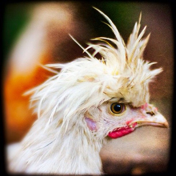 42 Best Real Hens Of Atlanta Images On Pinterest