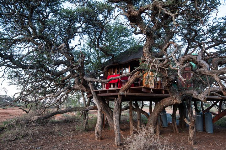 Mokala National Park - Tree House. Where the Giraffes poke their heads through the window! Photo by Scott Ramsay.