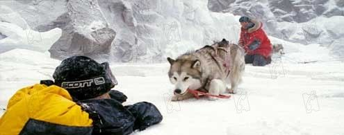 Antartica, prisonniers du froid : Photo Bruce Greenwood, Frank Marshall, Paul Walker