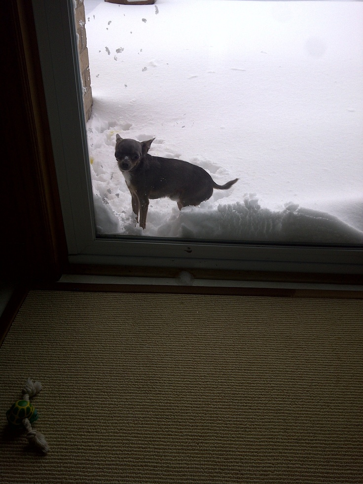 he just loves the snow ......not !!!!!