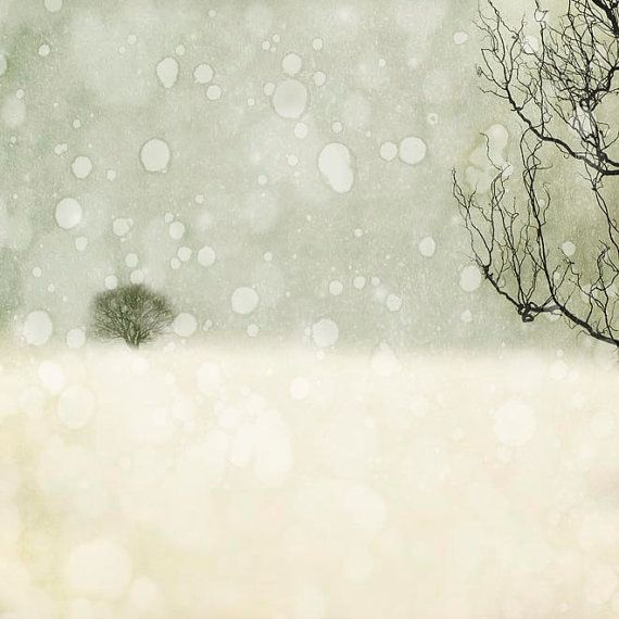 Winter photography, white and gray minimalist wall decor, snow and trees, 8x8 white decor on Etsy, $31.81 CAD