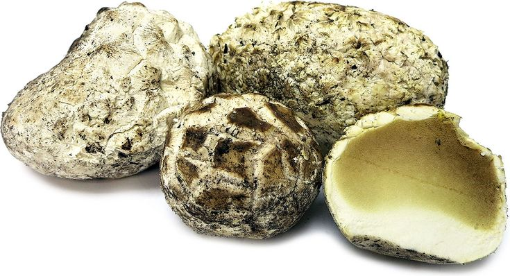 Puffball Mushrooms Information and Facts
