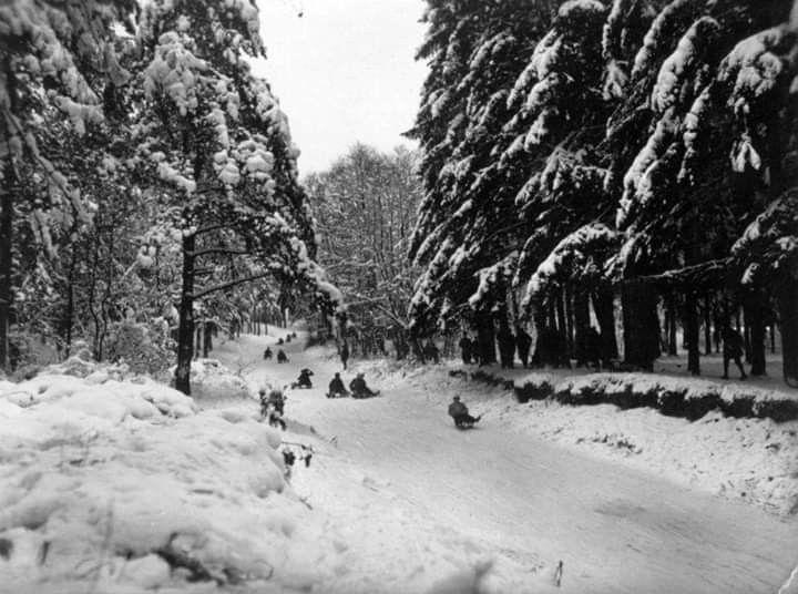 Tor Saneczkowy W Lesie Arkonskim Rodelbahn Sedina Pl Outdoor Snow