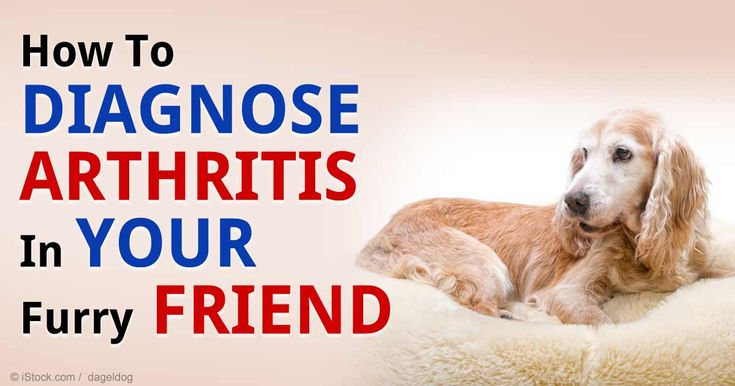 You may not be aware of it, but there are different types of arthritis that can affect your pet's overall health. http://healthypets.mercola.com/sites/healthypets/archive/2014/12/21/different-types-arthritis.aspx