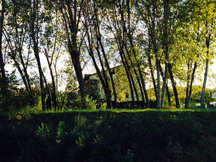 Risultati immagini per casa nascosta tra gli alberi