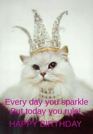 Happy birthday persian cat images