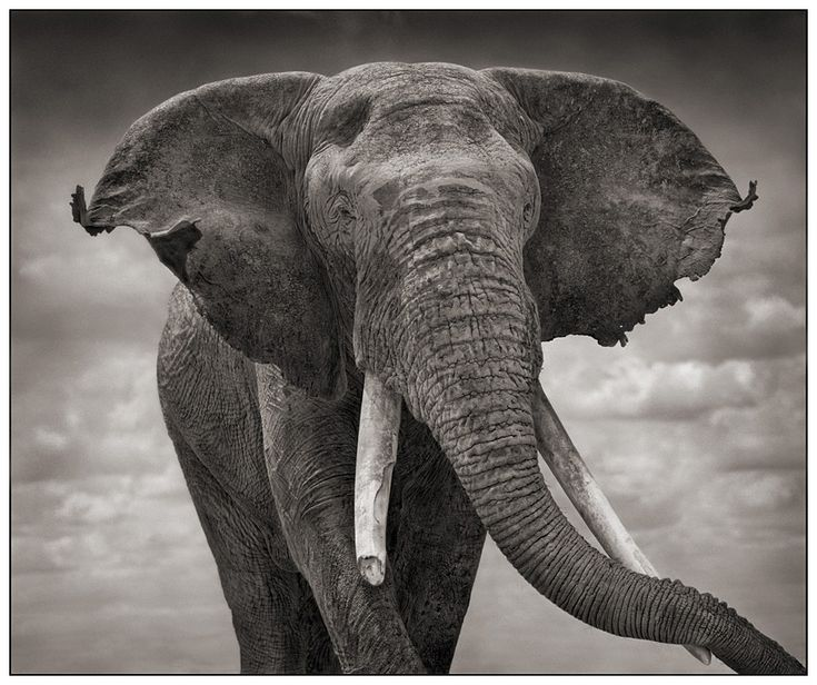 Célèbre Best 25+ Nick brandt ideas on Pinterest | Elephant family  GQ97