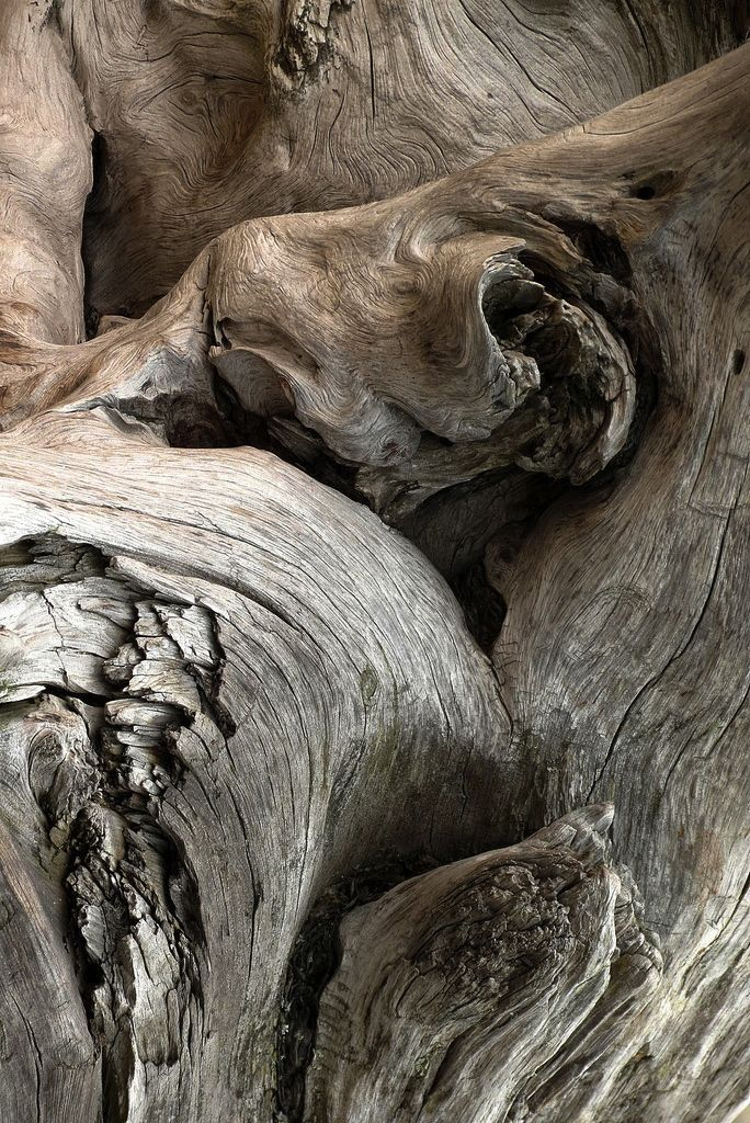 grey aged wood, natural textures and shapes