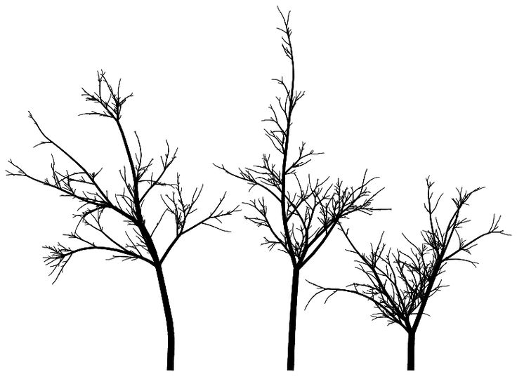 Line Drawing Of Tree : Best images about sketches on pinterest trees a tree