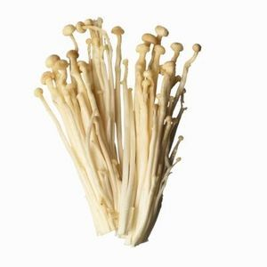How to Grow Enoki mushrooms. They taste great, they're just hard to find in my area :/