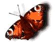 Felicitações das Borbotelas. Postais do Animais. Felicitações para todos os celebrations. Postais do congratulation do animais animado a emitir ao telemovel ou ao email. Envie postais de Borboletas grátis para todos ao enviar cartões virtuais de Borboletas animados. Desenhos para seu e-mail grátis e colecção de postais eletrônicos grátis com os melhores mensagens online para todas as ocasiões pelo facebook para Portugal e Brasil para enviar aos seus amigos. Serviços gratuitos de envios.